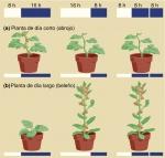 Respuestas de distintas plantas a cambios en el fotoperíodo